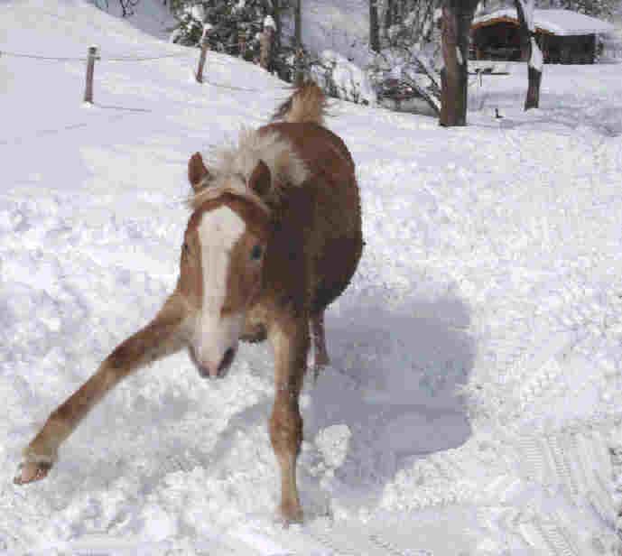 Unser Fohlen im Schnee
